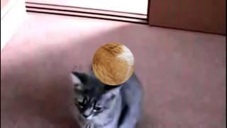 Мое видео.Приколы с кошками.КОШКИ В ТАНЦЕ!