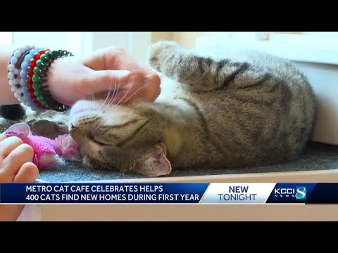 Metro cat caf helps find homes for more than 400 felines
