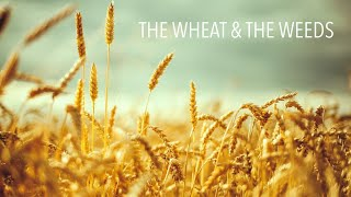 The Wheat & The Weeds