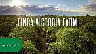 Finca Victoria Farm | Young Living Essential Oils