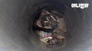 깊고 좁은 환풍구에서 6일째 들려오는 강아지 울음소리.. ㅣDog Stuck Deep In The Hole …