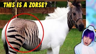 10 Most Shocking Real Mutations In Animals!
