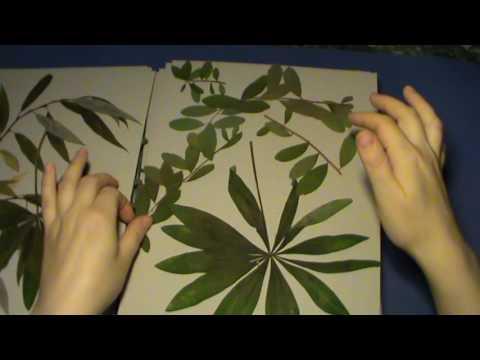 Как гербарий превратить в шедевры