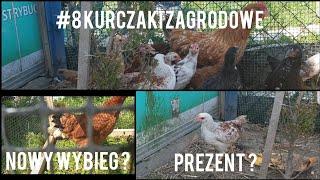 #8 Kurczaki zagrodowe: Widz ? Oraz nowy wybieg ?