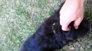Dog Has Crazy Eyes