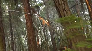 Part 5 End of the trek to Pygmy Forest , Mendocino County
