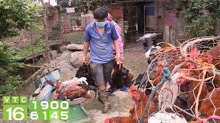 Giá gà thấp nhất 10 năm qua, người nuôi phá sản | VTC16