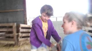 Sheep Farming in Michigan