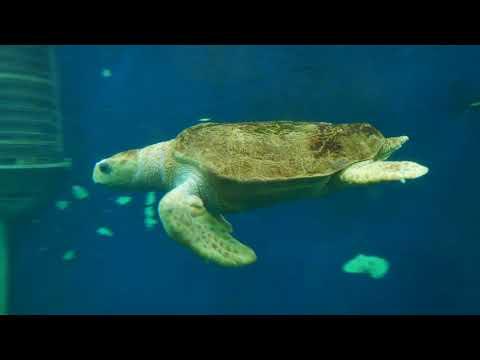 Saint-Malo Grand Aquarium