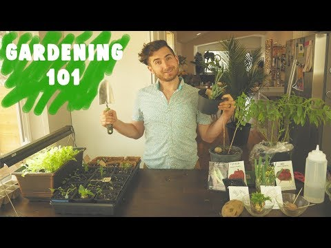 Beginner's Guide to Gardening & Growing Your Own Food