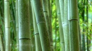 Zen Garden-Fifty Shades of Green - Relaxation & Meditation (Full Length Version)