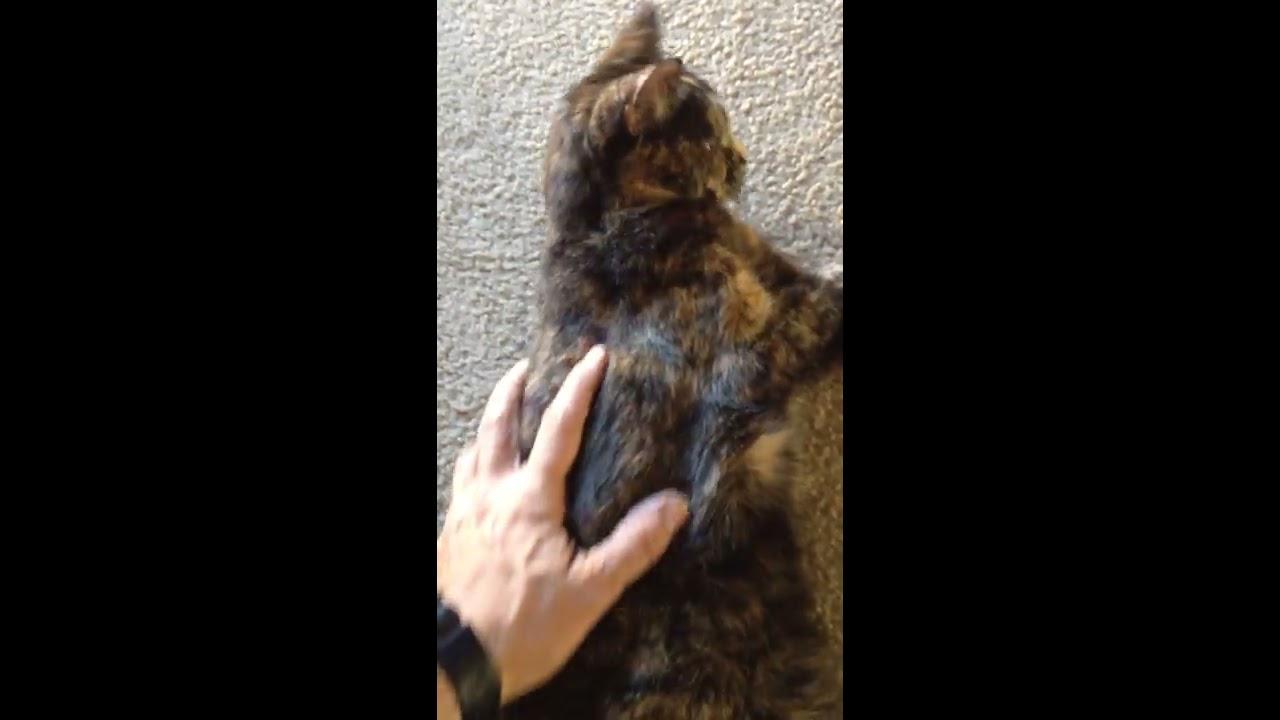 Youtube Cat Eye Tutorial: Cat Seizure, 17 Year Old Cat
