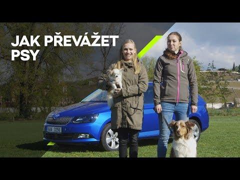 ŠKODA Nezeptat se: Jak cestovat se psy v autě?