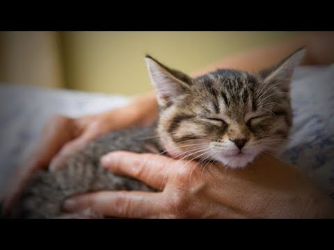 Cute Cats and Dogs Compilation -  Funny Kittens and Puppies