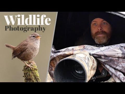 WHAT A GREAT SURPRISE | Wildlife photography - tips and tricks