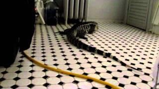 Giant Potty Trained Lizard