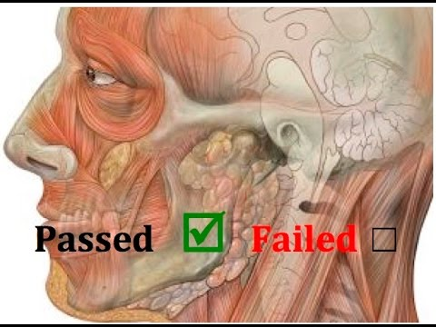 How to Pass Anatomy & Physiology -The SMART Way - YouTube