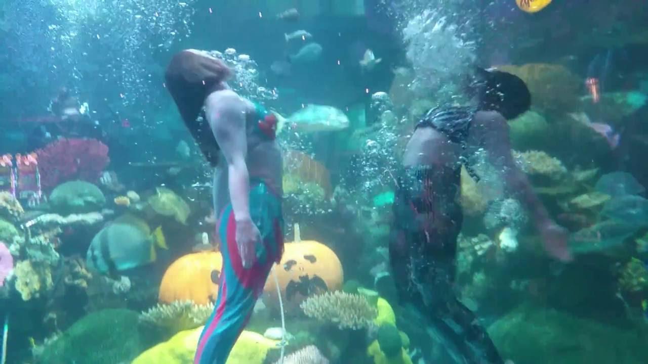 Silverton Casino Mermaids