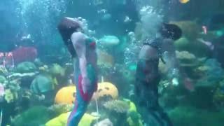 Mermaids in the Silverton Casino Aquarium