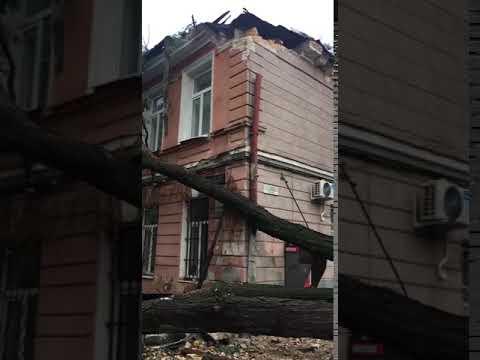 Дерево упало на Конной улице в Одессе