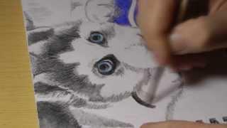 Рисунок акварельными карандашами #2: Щенок Хаски