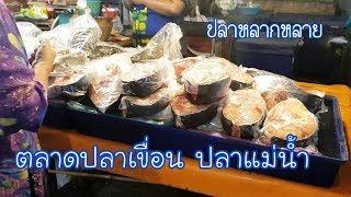 พาเดินดูตลาดปลาเขื่อน ปลาแม่น้ำชัยบาดาล : เที่ยว ตาม ใจ EP.113