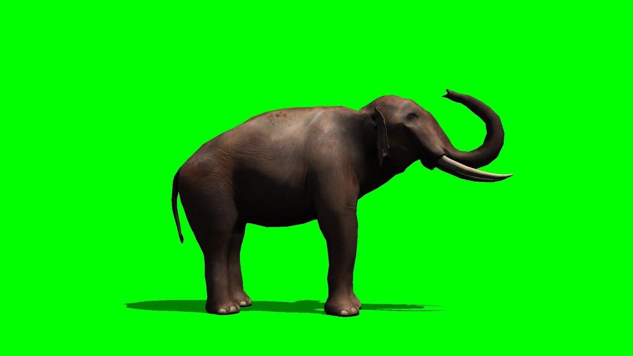 Most Inspiring Wallpaper Home Screen Elephant - maxresdefault  Pictures_739266.jpg