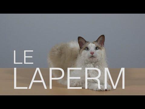 Tutocat - Le Laperm