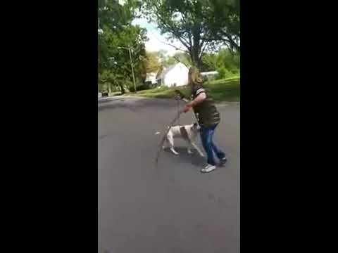 Pitbull saves owner from stray dog attack