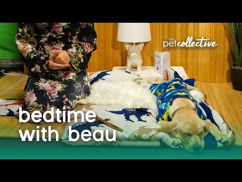TPC LIVE! Bedtime with Beau | The Pet Collective