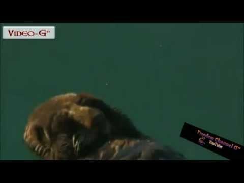 La piccola lontra di mare che nuota a occhi chiusi