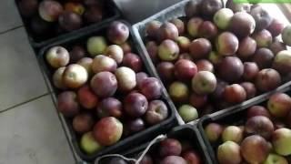 Как заготовить яблочный сок на зиму.How to prepare apple juice for the winter.