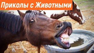 Смешные коты / Приколы с кошками / Смешные животные / Смешные домашние животные / Подборка приколов