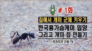 집에서 개미군체 키우기, 한국홍가슴개미 입양 그리고 개미집 만들기 [치키치키]