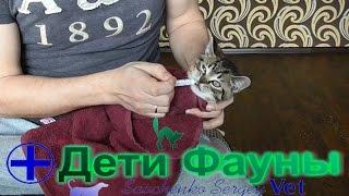 Глисты у кошек, даем суспензию котенку