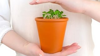Самые распространенные БОЛЕЗНИ комнатных растений