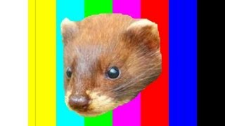 5 Awesome Facts About The Least Weasel