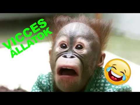 VICCES ÁLLATOK # 1 - majom és gorilla - próbálj meg nem nevetni vagy mosolyogni letöltés