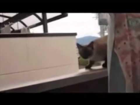 Flying Cat: Set Reasonable Goals
