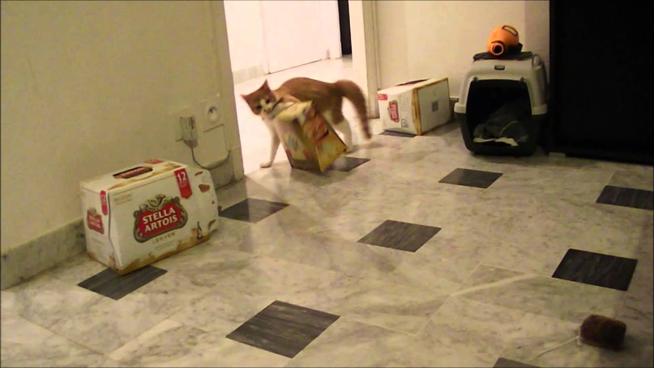 Cliquot the cat jumping from one box to another youtube for Fenetre 50 x 60
