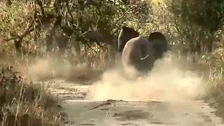 SafariLive 3 May.  Elephant attacks safari vehicle live!!
