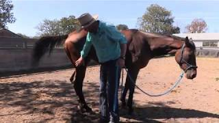 How to pick up a horses feet especially one that kicks!