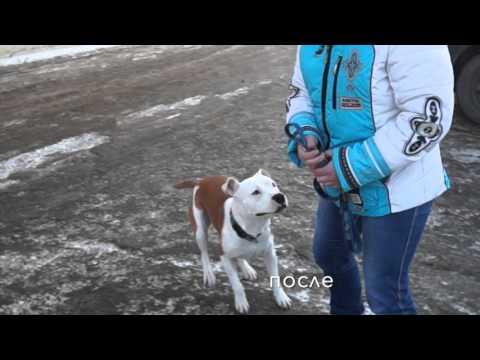 Результат лечения заболевания суставов у собаки, www.endovet.org