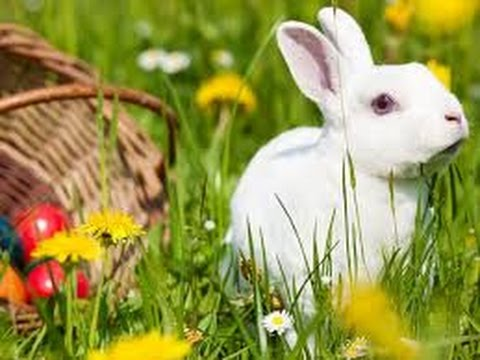 Ahead of Easter, the British banned pet stores sell rabbits