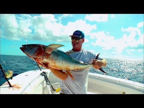 Yellowfin Tuna Fishing Tactics In The Spread
