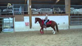 Quarter Horse à vendre