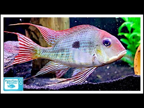 55 Gallon Fish Tank Stocking Ideas: Some Cool Center Piece Fish!