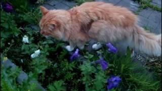 Поймал рыбу и тритона в своём пруду / коты радостные от карасей
