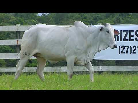 LOTE 88   FHGN A 1513, 1728, 1297, 1503