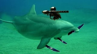 Military Dolphin War For Ukraine in Black Sea?
